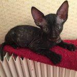 Котёнок греется на батарее отопления