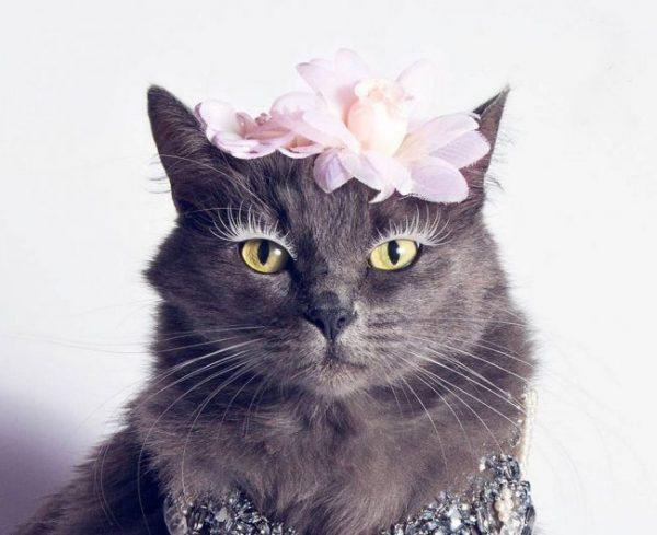 Кошка породы нибелунг с заколкой на голове