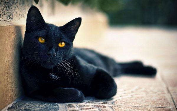 чёрный кот с янтарными глазами лежит на мраморном полу