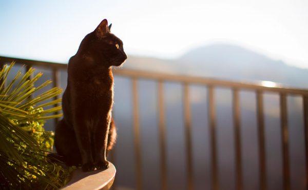 чёрная кошка сидит на перилах