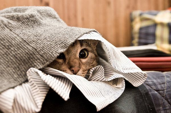 кошка прячется в одежде