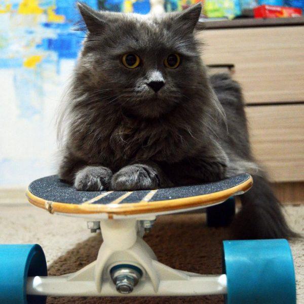 Нибелунг лежит на скейтборде