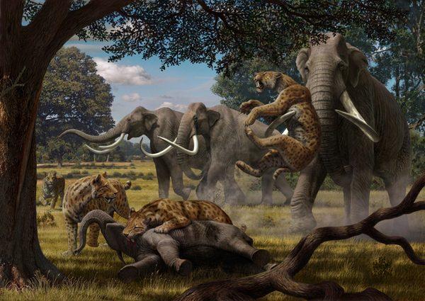 Битва мамонтов со смилодонами