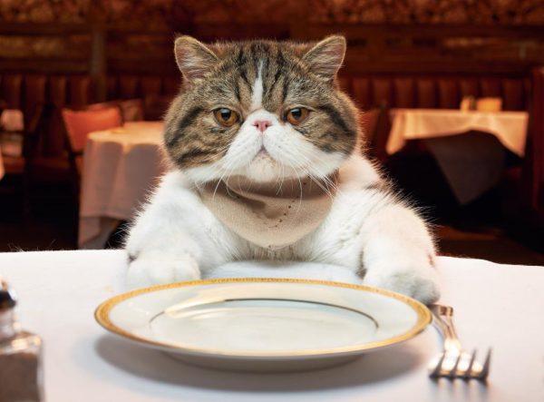 Кот за столом перед тарелкой