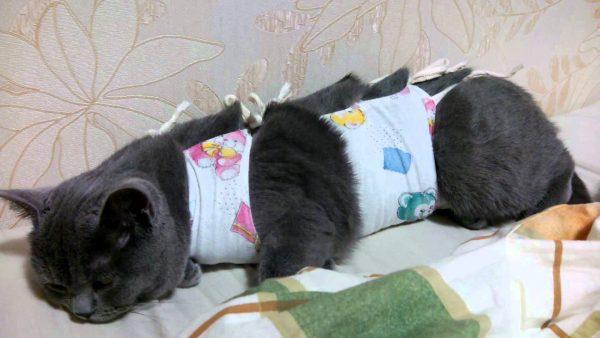 Чёрная кошка в бандаже после операции