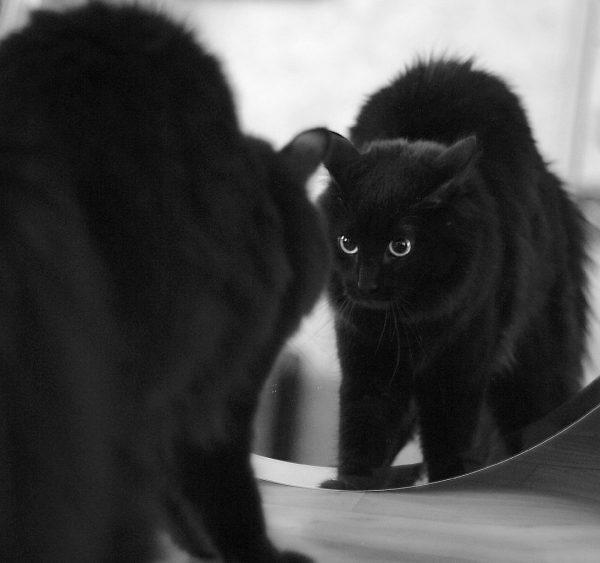 чёрный кот и зеркало