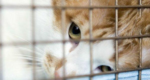 Грустный кот в клетке