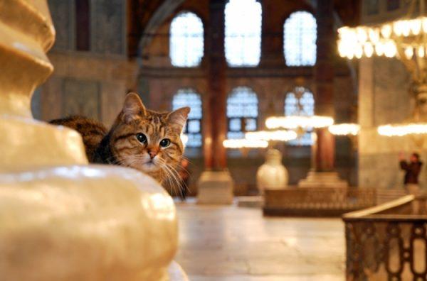 Храмовые кошки