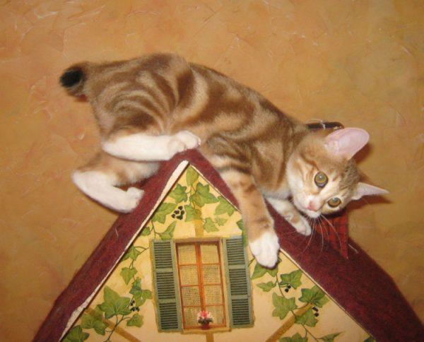 Игривый котёнок японского бобтейла