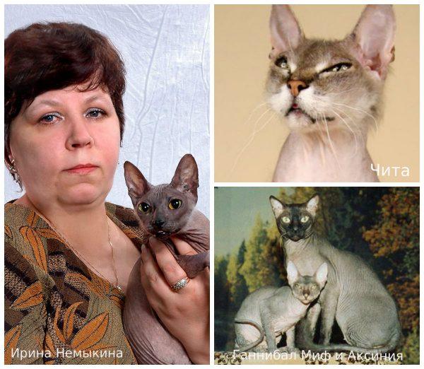 Ирина Немыкина и донские сфинксы