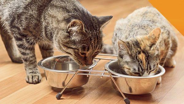 Как кормить двух кошек