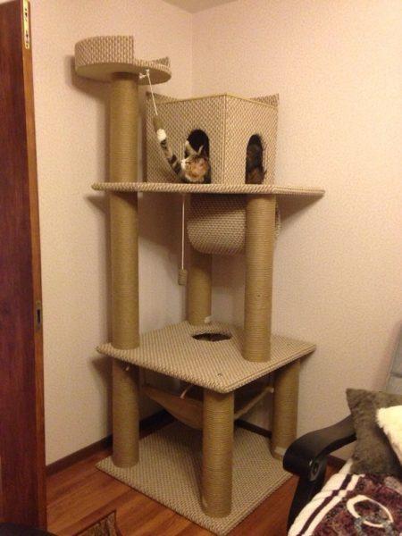 Кот в когтеточке с домиком