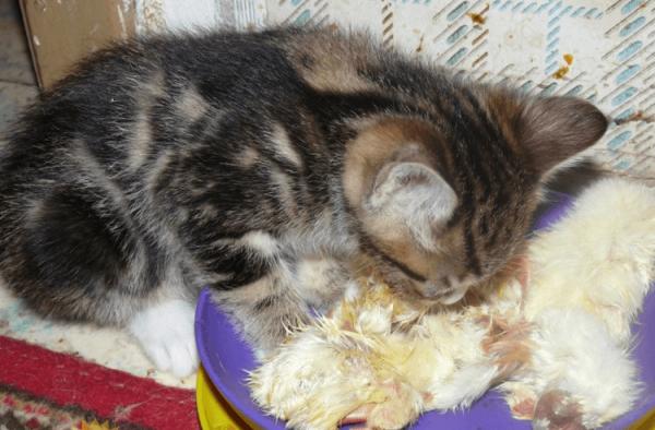 Котёнок ест