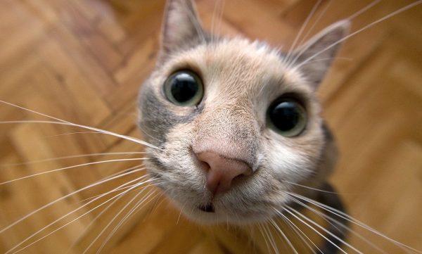 Кошачья мордочка крупным планом