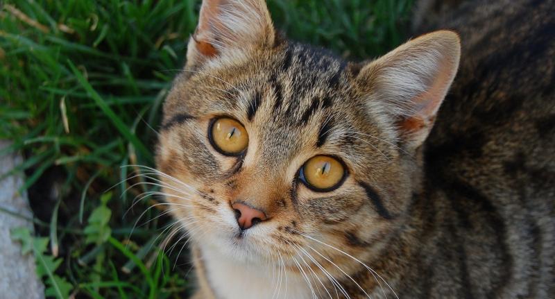 Что такое кальцивироз у кошек и как с этим бороться