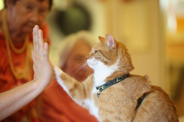 Кошка «даёт пять» человеку