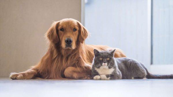 Кошка и собака лежат