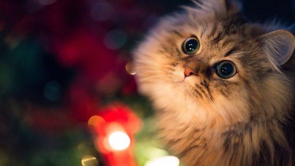 кошка с большими глазами на фоне огоньков