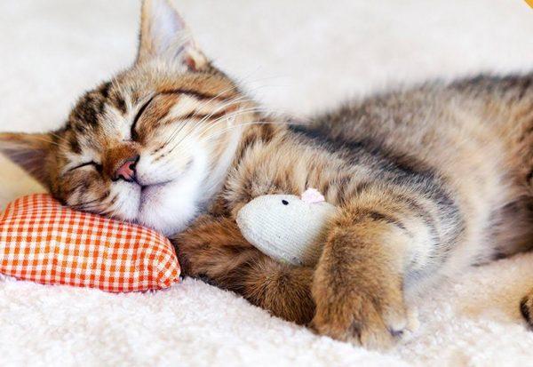 Кошка спокойно спит