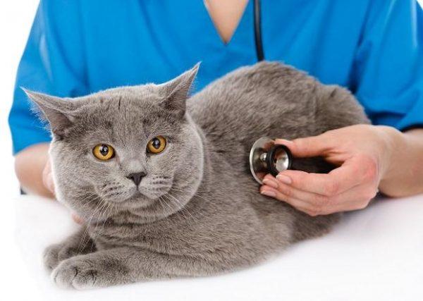 Кот на приёме у ветеринара