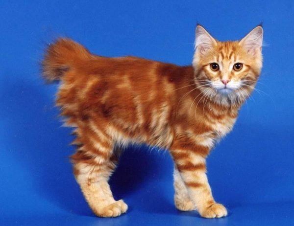 Котёнок курбоба