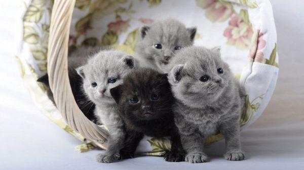 Котята в корзине