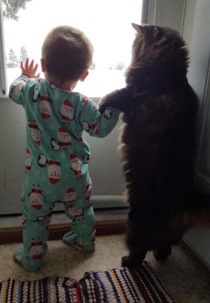 Мейн-кун и ребёнок смотрят в окно