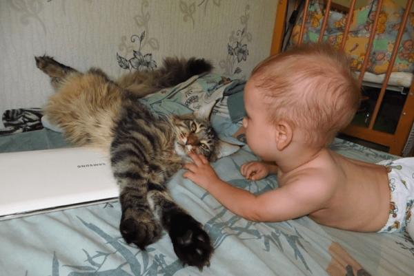 Мейн-кун и ребёнок