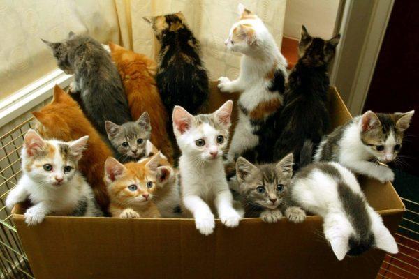 Много разноцветных котят в коробке