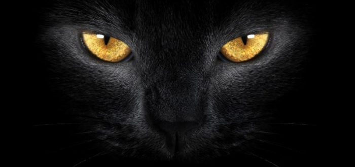 морда чёрного кота с песочно-жёлтыми глазами