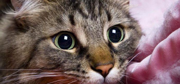 морда кошки крупным планом