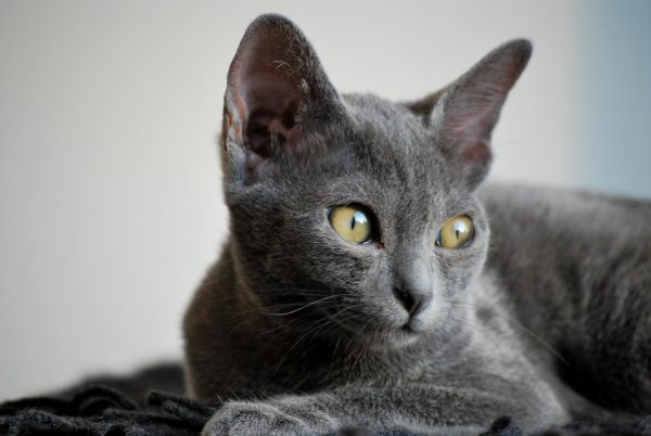 Котёнок кората крупным планом