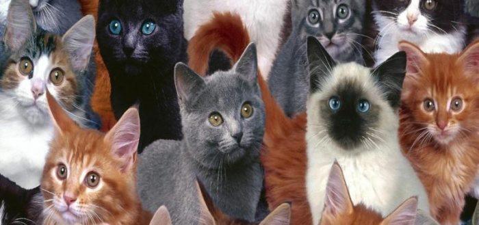 очень разные кошки