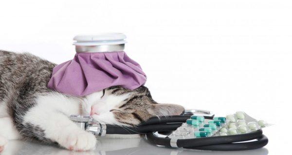 Котёнок с грелкой и фонендоскопом