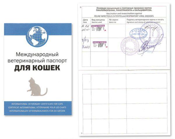 Паспорт котёнка