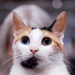 Разноглазая японская кошка