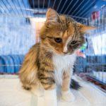Рыжий полосатый кот сидит в клетке