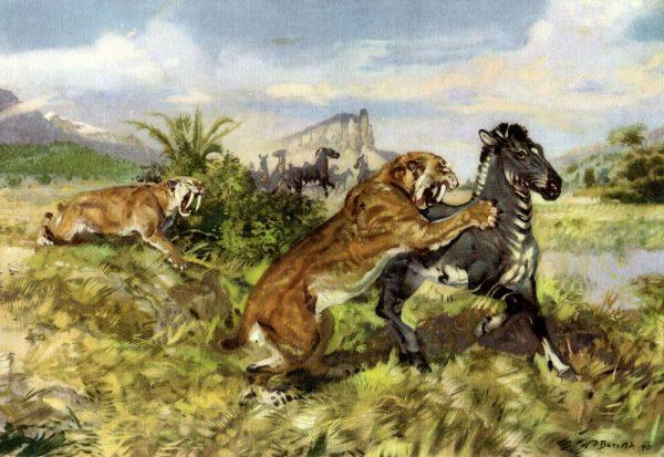 Саблезубы нападают на зебру
