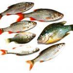 Семь речных рыб