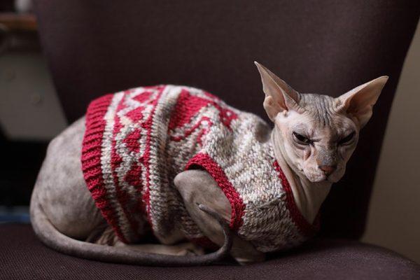 Сфинкс в свитере