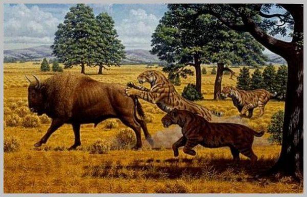 Смилодон преследует бизона