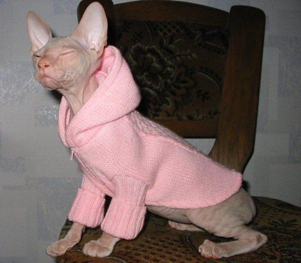 Тёплая одежда для сфинкса
