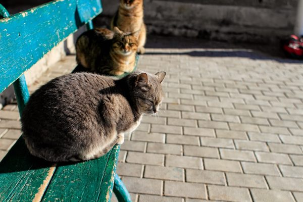 три кошки на лавочке
