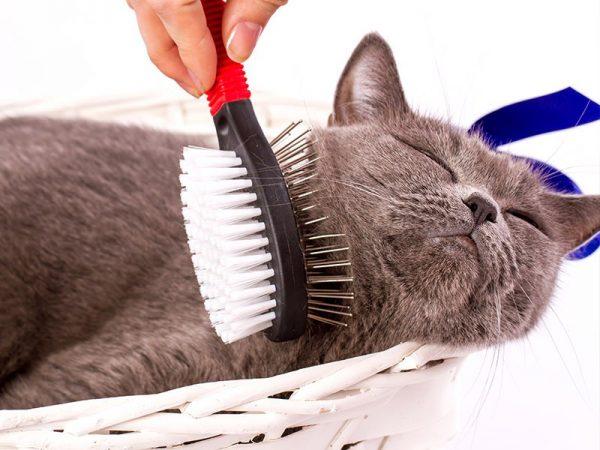 Вычёсывание кота