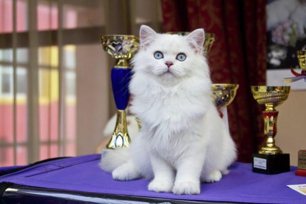 Выставка для кошек