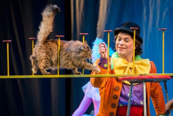 Кошка идёт по жерди в цирке