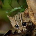 Крохотный котёнок ржавой кошки
