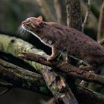 Ржавый кот на дереве