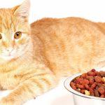 рыжий кот рядом с миской еды