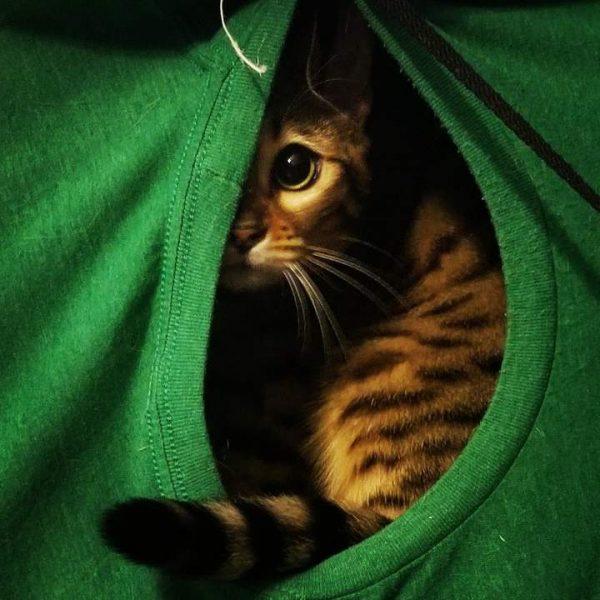 Кошка прячется в зелёной майке